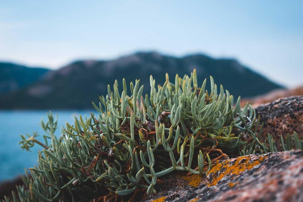 Faune et flore en Corse